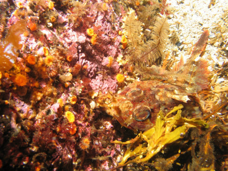 FIND THE FISH This is a Red Irish Lord. The fish in Alaska utilize camouflage to surprise prey and also to avoid being preyed upon.