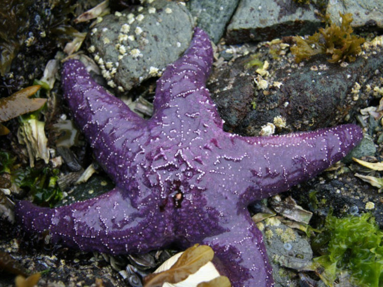 TRUE STAR True stars come in a variety of colors and are easily viewed in shallow waters.